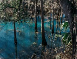 gennie springs