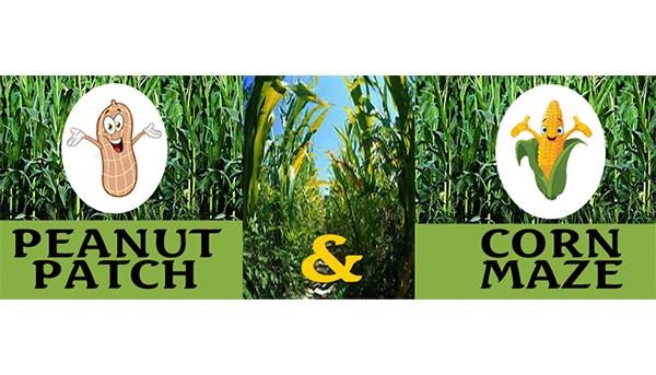 Peanut Patch & Corn Maze