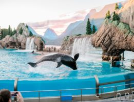 Go To SeaWorld for Free