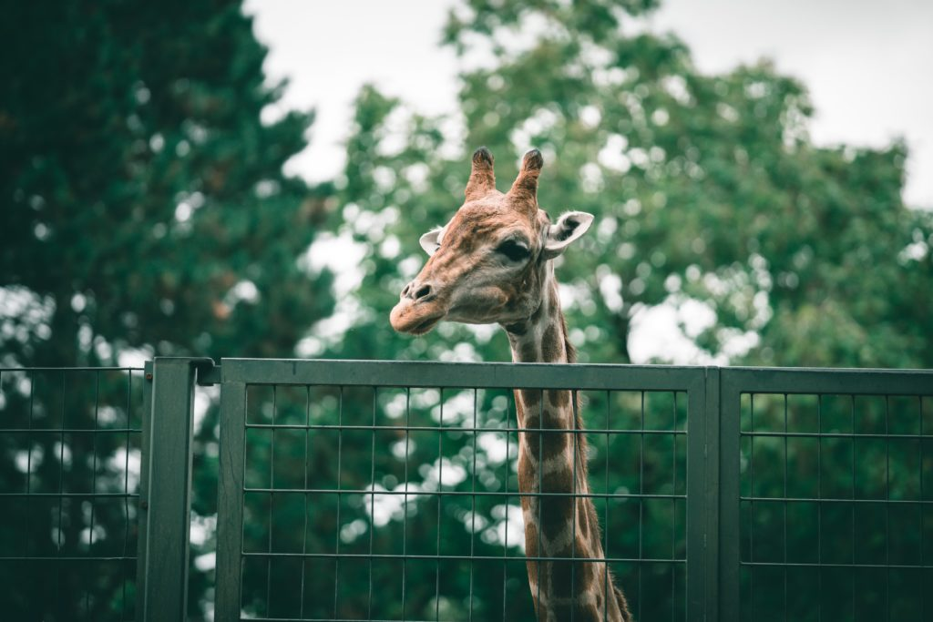 Jacksonville Zoo and Gardens for free